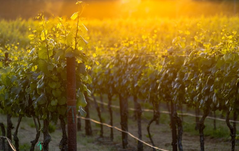 The Best Finger Lakes Wineries